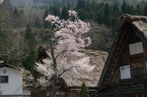 06050502shirakawagou